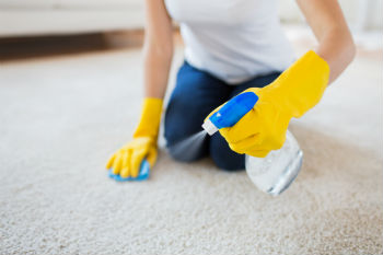 Getting rid of household mold